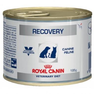 Консервы Royal Canin Recovery для кошек и собак в период выздоровления