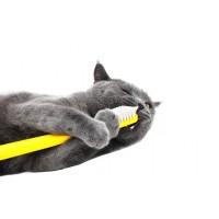 Гигиена для кошек, котов, котят