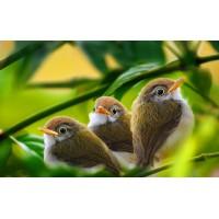 Зоотовары для попугаев