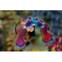 Зоотовары для аквариумных рыб